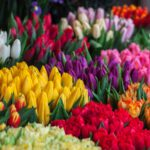 De betekenis van bloemen